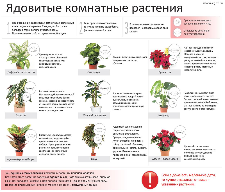 Фото и описание комнатных цветов и растений